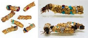 Las larvas de frigáneas colaboran involuntariamente con Hubert Duprat para crear estas sensacionales esculturas naturales.